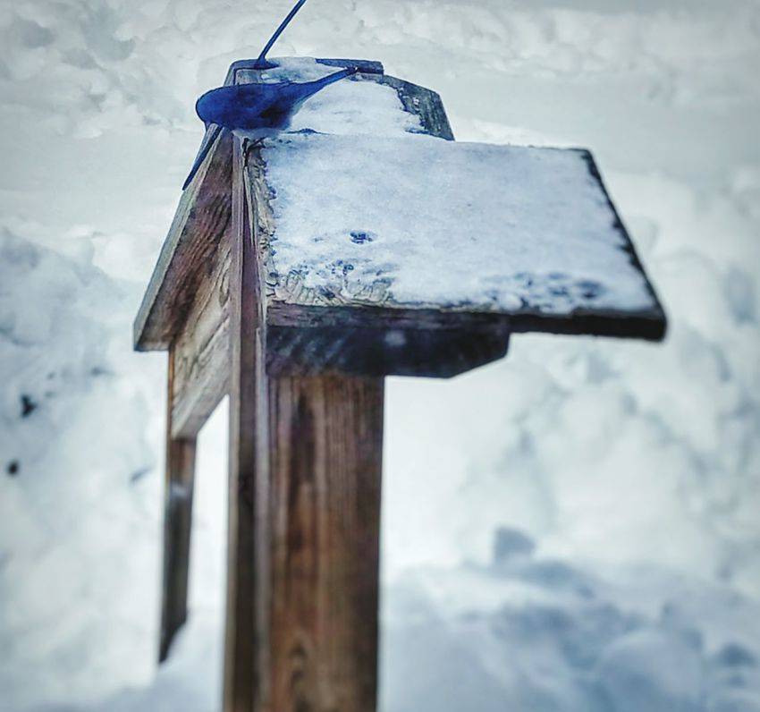 """Difficult to find food after close to 30"""" of snow fell yesterday. No People Sky Outdoors Wood - Material Day Winter Close-up Cold Temperature Inside Looking Out Weather Winter Beauty In Nature Deep Snow Nature Snow Blizzard2017 Bird No Food"""