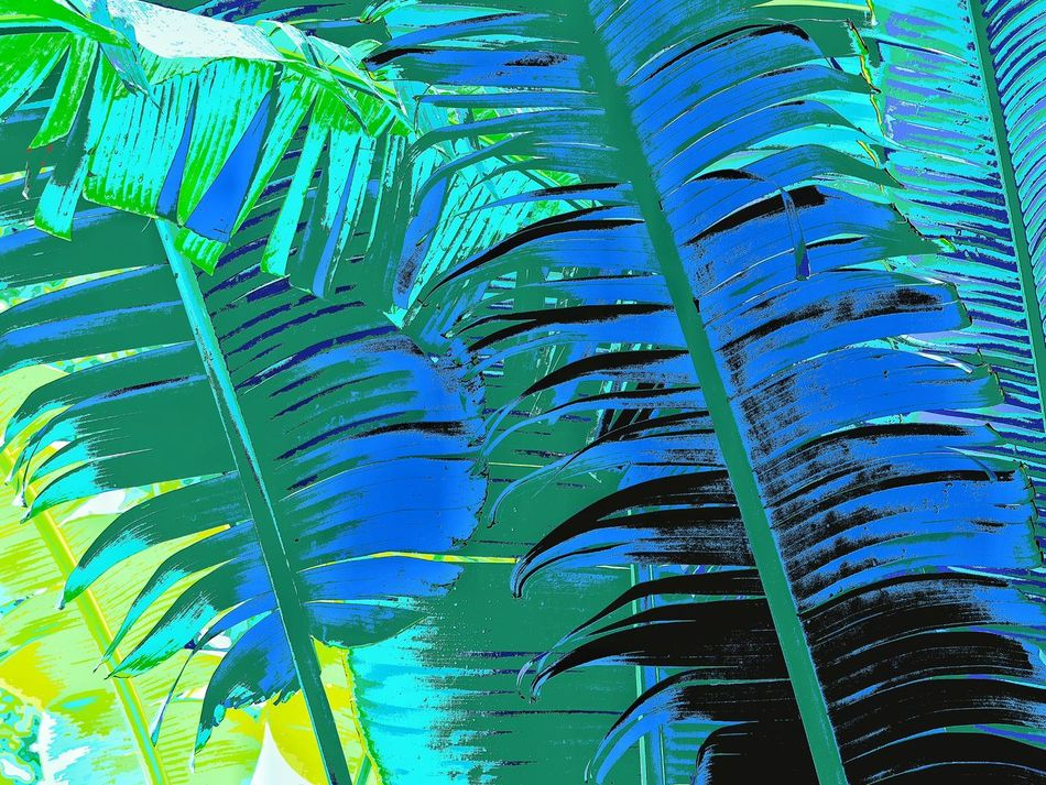 Special Effect Is Cool Edited My Way Low Angle View Tranquility Spec Blue Close-up Plant Check This Out Awesome_captures Banana Leaves Non-urban Scene Unique Perspectives Check This Out 😊 EyeEm Nature Lover Nature On Your Doorstep Walking Around Taking Pictures Hello World Beauty In Nature Vibrant Color Pattern, Texture, Shape And Form EyeEm Masterclass EyeEm Nature Lovers Leafs 🍃 Details Of Nature