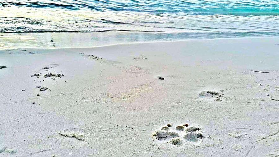 Blue Wave Roatan Honduras Water Islandlife Best Vacation Ever Beach Life Doglover