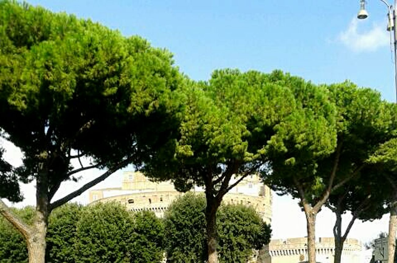 Tree Blue Sky Outdoors No People Nature Architecture Rome Rome Italy