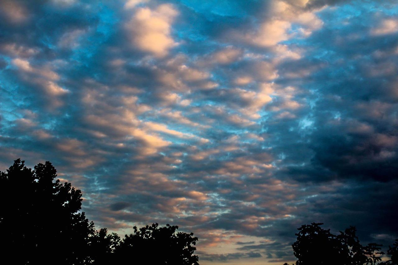 tree, silhouette, sky, nature, beauty in nature, low angle view, tranquility, sunset, no people, scenics, cloud - sky, outdoors, day