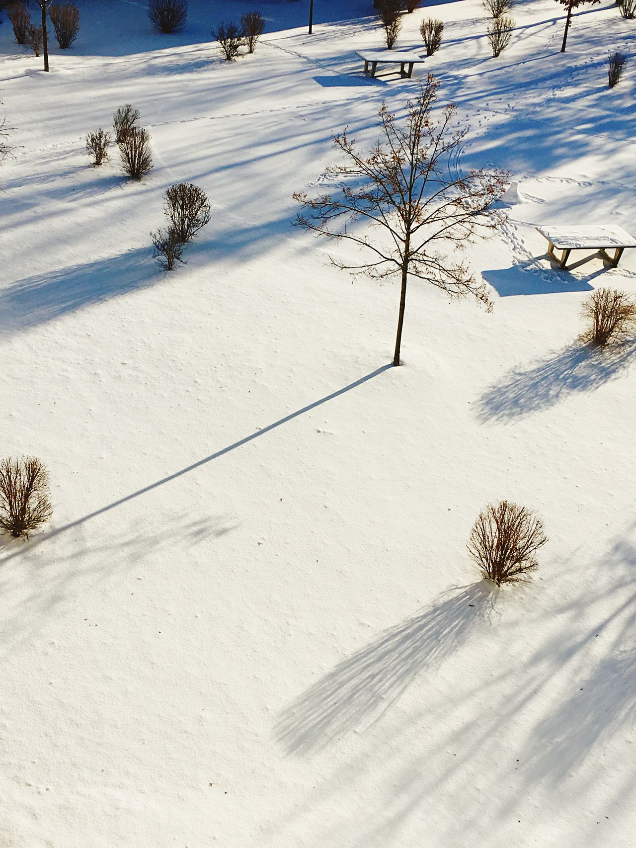 Winter Snow Cold Temperature Weather White Color Nature Tree Beauty In Nature Outdoors Covering Day No People Landscape January Peace And Quiet Snowtrail