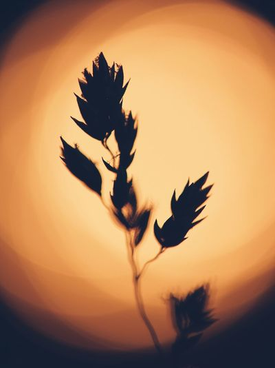 Sunset Nature Silhouette No People Beauty In Nature Flying Motion Sky Outdoors Close-up Bird Flower Day Sommergefühle