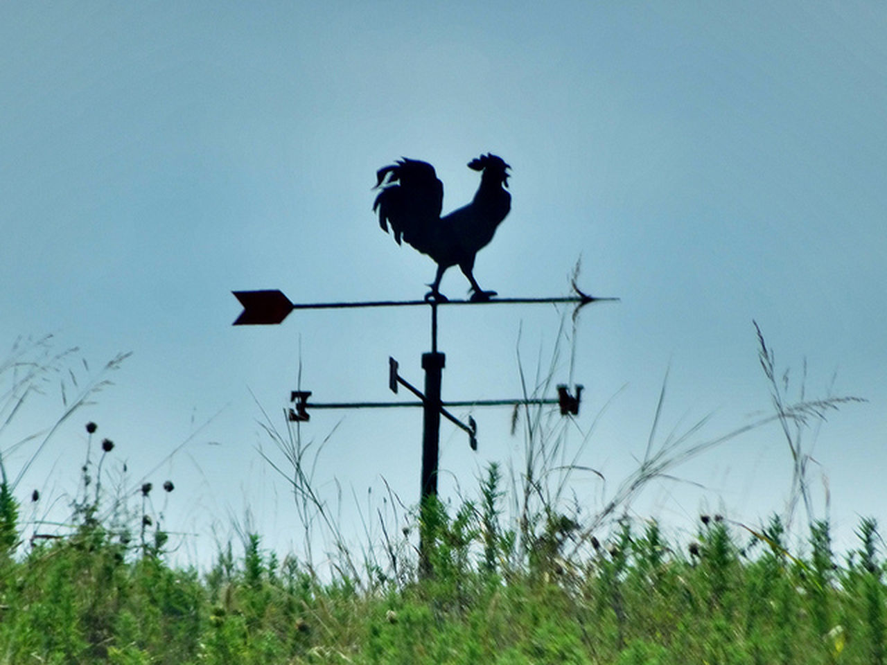 bird, animal themes, animals in the wild, perching, grass, no people, nature, day, outdoors, clear sky, one animal, low angle view, animal wildlife, sky