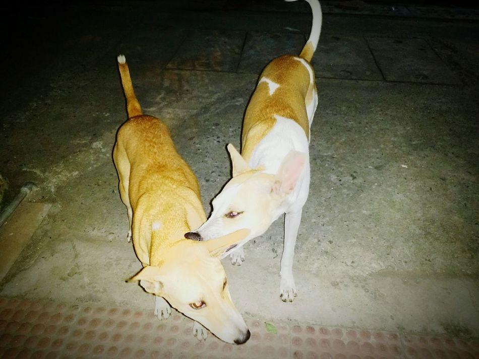 Dogs Animal Themes Canine Streetphotography Domestic Animals DelhiGram Sodelhi Streetdogs Streetsofindia👣 Animal Thikanadilli Newdelhi Streetsofdelhi