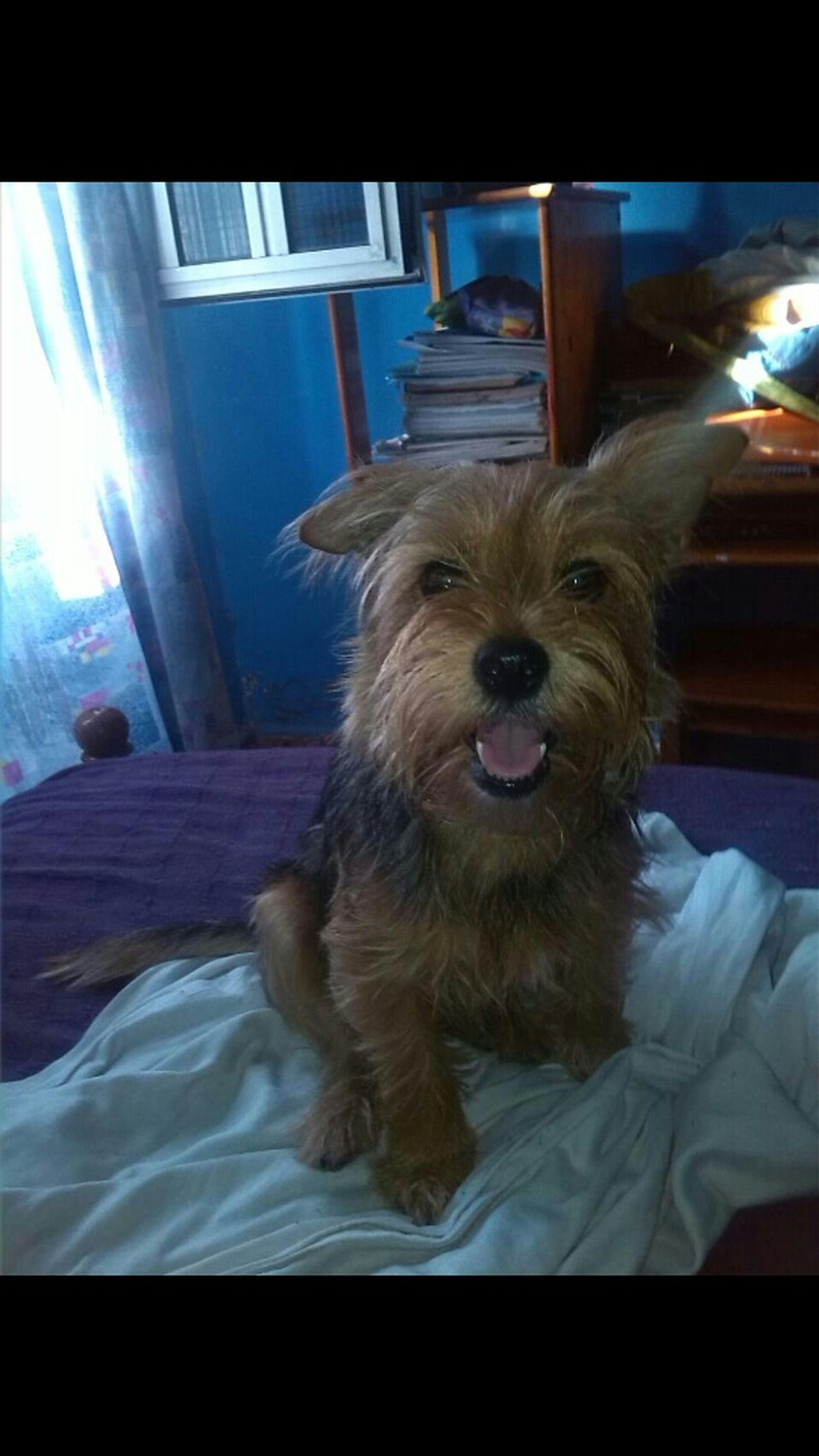 Perro :33 Perros  Perrita  Dog Love Dog❤ Dog