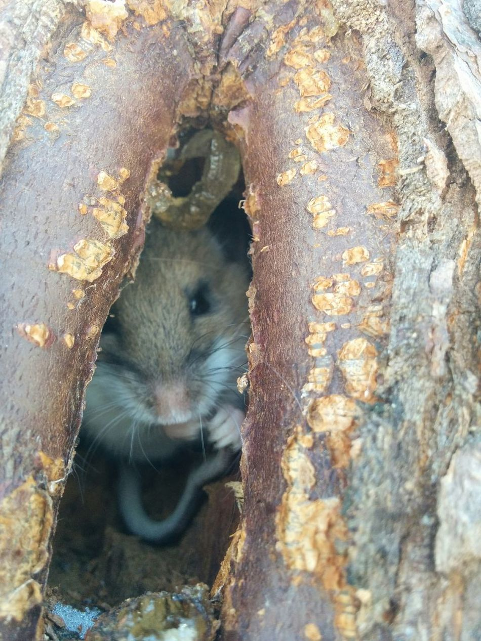 Beautiful stock photos of mouse, Animal Themes, Animals In The Wild, Day, Hole