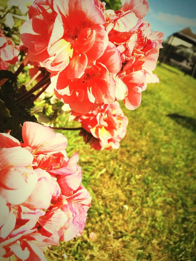 Taking Photos Flowers Sunnydays Offwork NewToEyeEm