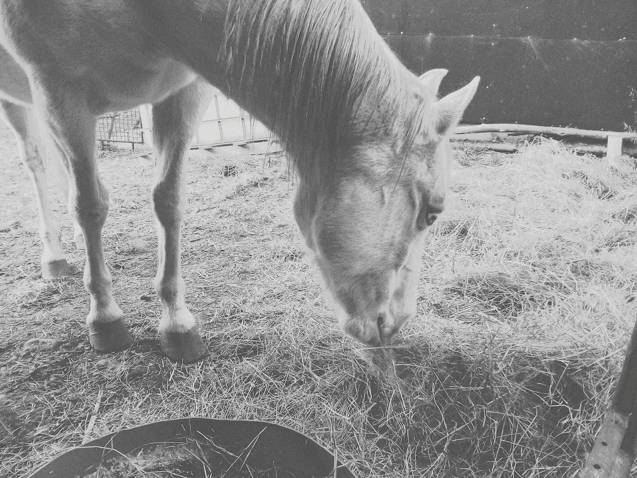 domestic animals, animal themes, horse, one animal, mammal, livestock, field, day, grass, outdoors, no people, nature, standing, pets