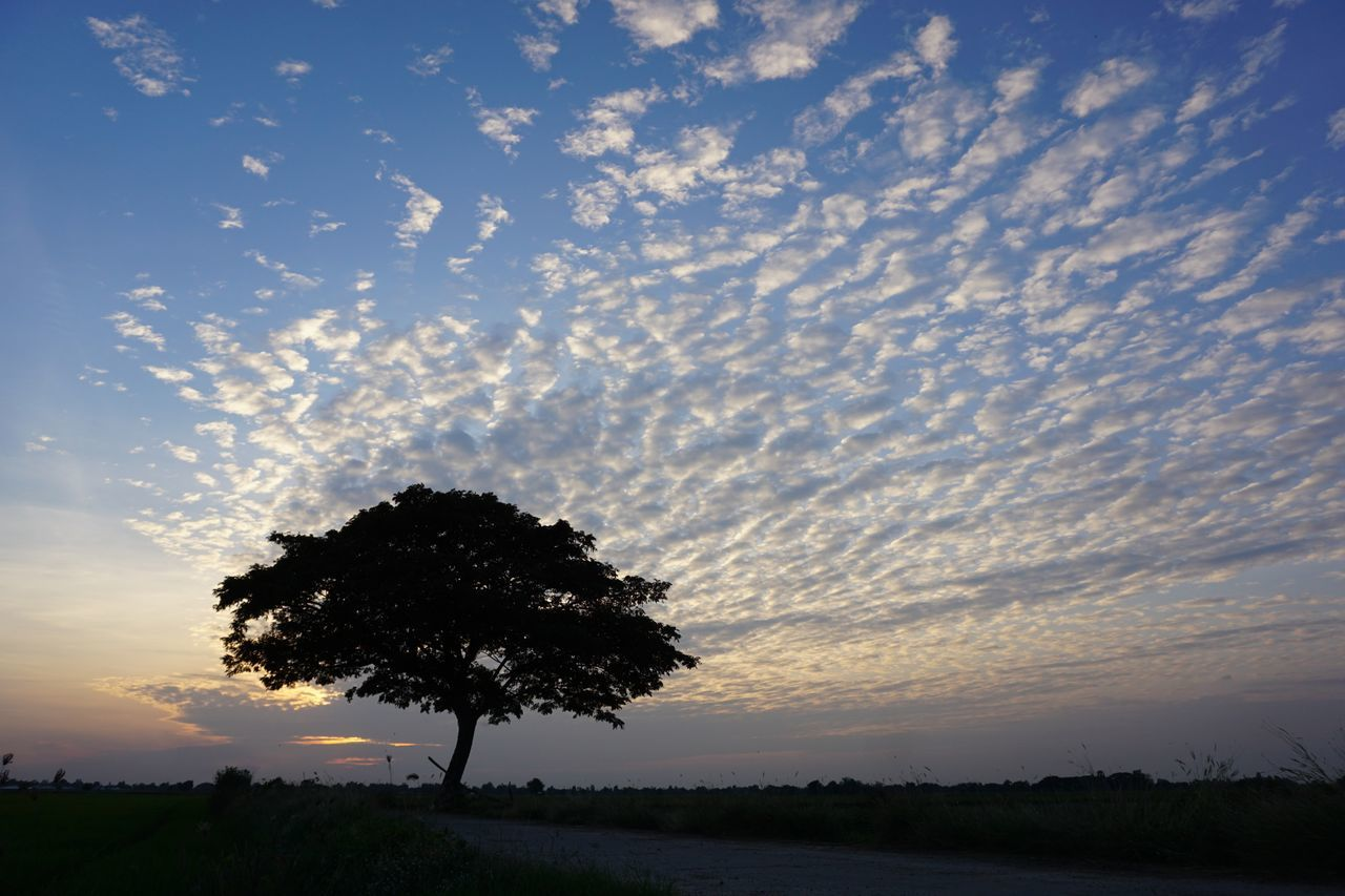 Tree Silhouette Nature Space And Astronomy Sunset Sky Beauty In Nature Thailand