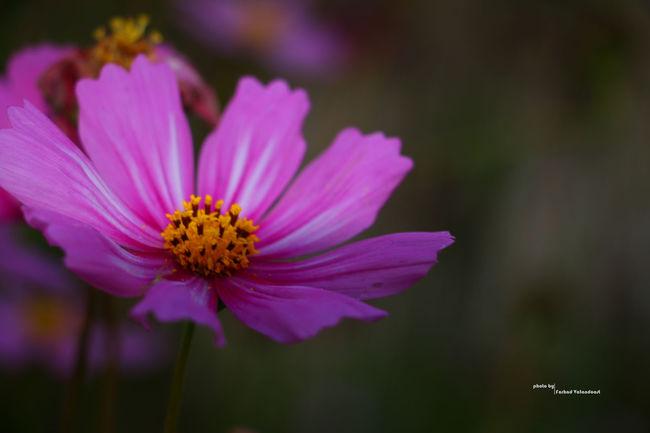 Flowers Nuture Iran Guilin Iranian_photography Photography Canonphotography Canon Canon 70d Flower Of Eyeem