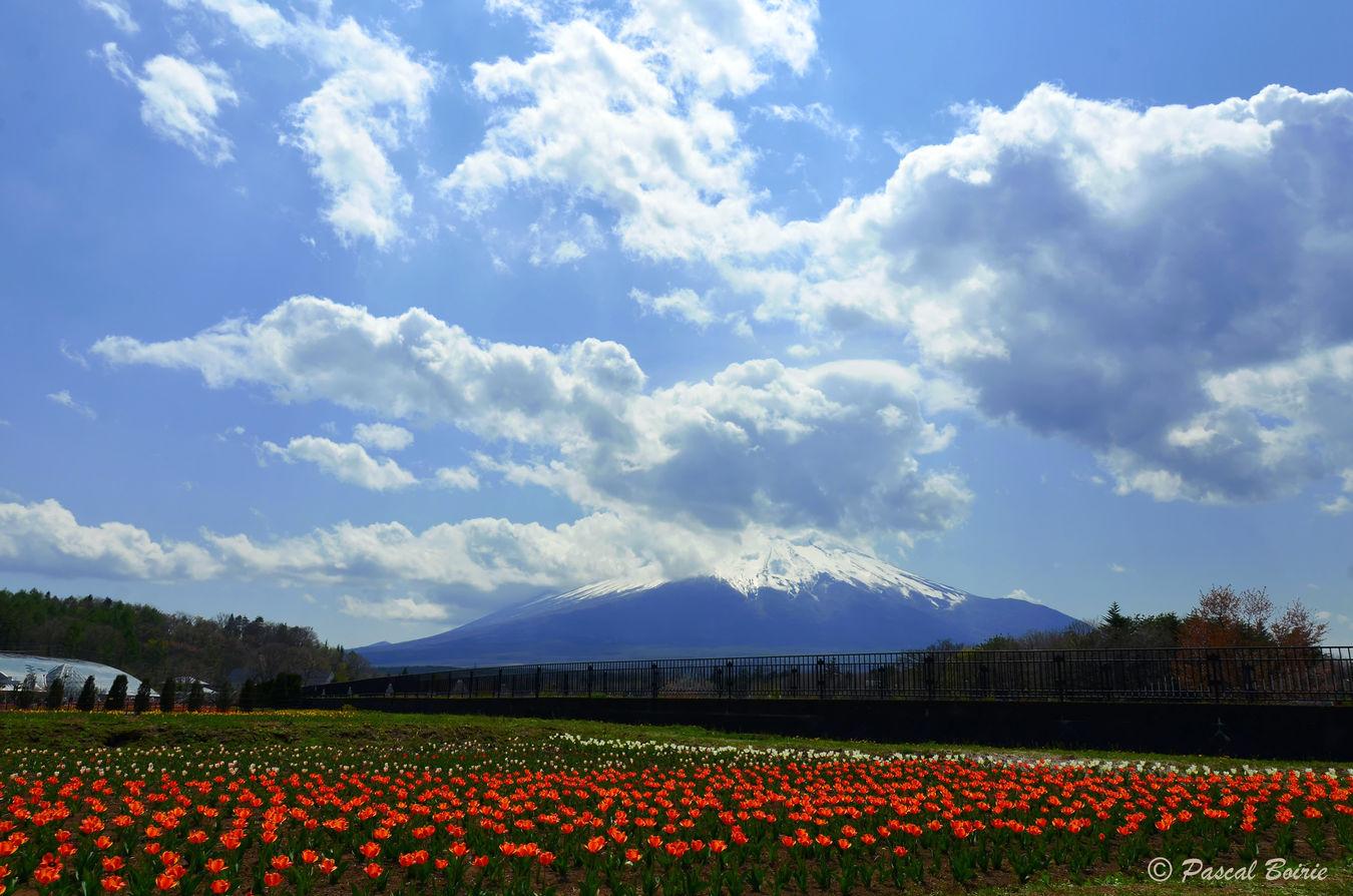 Beauty In Nature Cloud - Sky Day Flower Fuji Japan Japon Landscape Mont Fuji Mountain Nature No People Outdoors Sky fujisan Fragility Fujisaners] Fujisan, Sacred Place And Source Of Artistic Inspiration Japón Japón💙