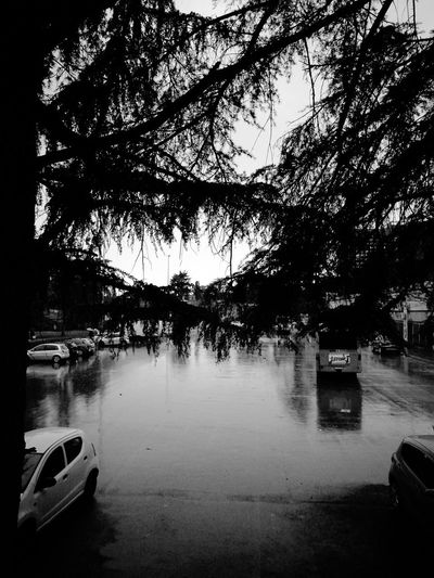 Tree Water Outdoors No People Blancoynegra Black And White Photography Huawei P9. Leica Huawei P9 Leica Lens EyeEm Gallery Reflection Tree cars #car #ride #drive #tagsforlikes #driver #sportscar #vehicle #vehicles #street #road #freeway #highway #sportscars #exotic #exoticcar #exoticcars #speed #tire #tires #spoiler #muffler #race #racing #wheel #wheels #rim #rims engine horsepower