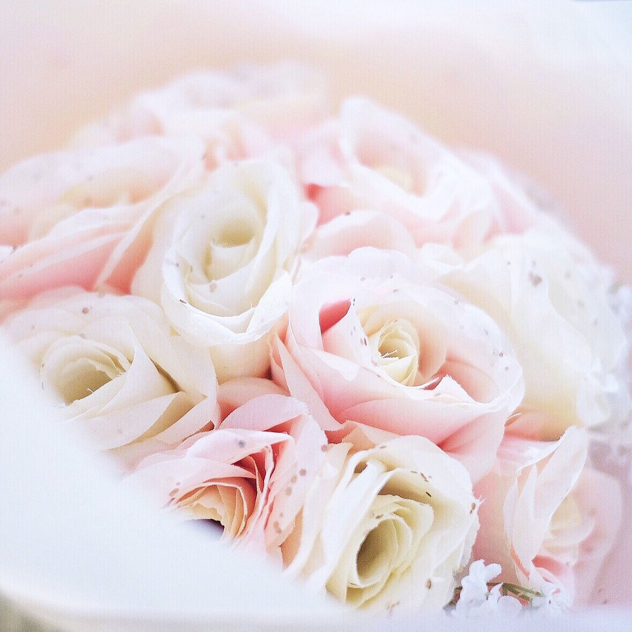 food and drink, freshness, no people, food, close-up, healthy eating, rose - flower, indoors, flower, flower head, ready-to-eat, day