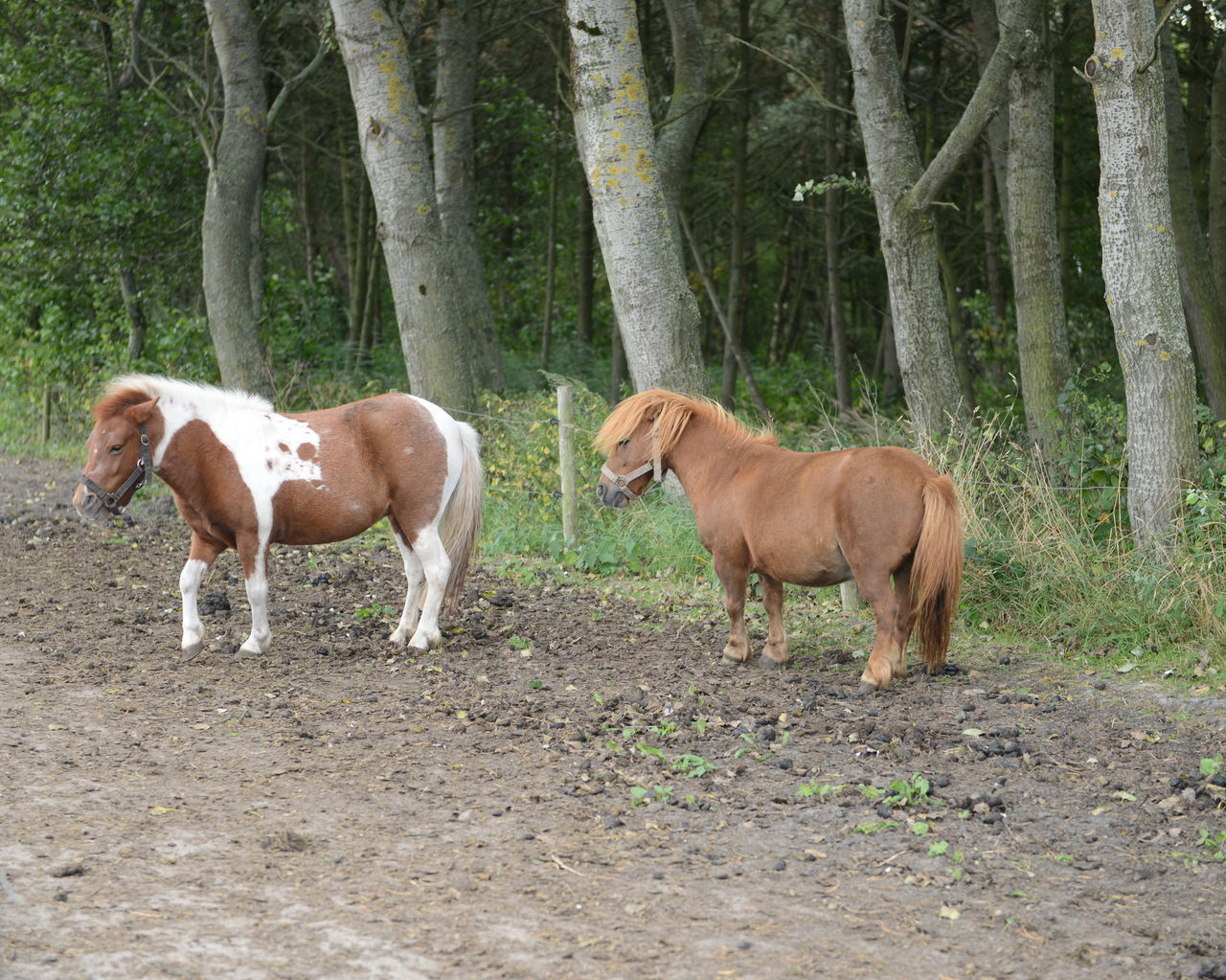 Pony My Little Pony Ponies Farm Gutter Chetlander Animals Animal Farm