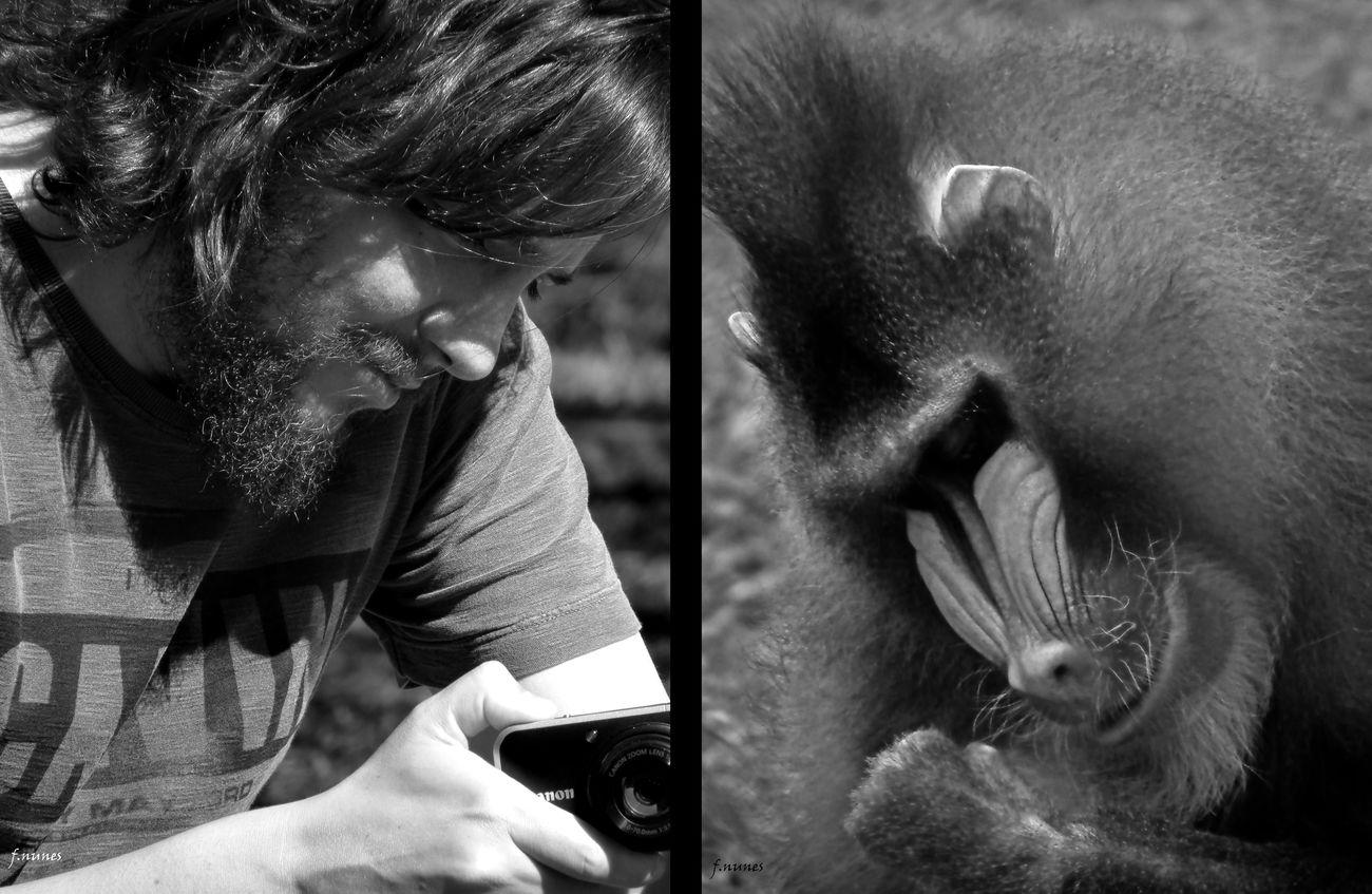 Animals Animais Babuino Men Animal Themes Fabricionunesfotografia Nature Equals Homem