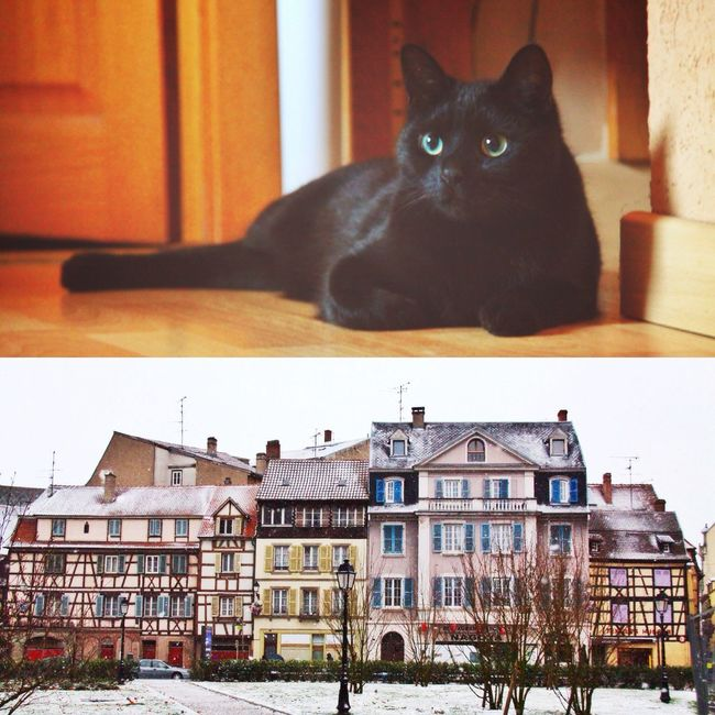Queen and Colmar! Cat Colmar BLackCat