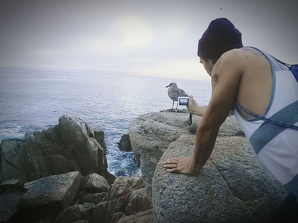Capture The Moment You Wish You Lived Here People Photography Nature Photography Homies Segull Oceancitycool Monterey Bay Lovers Point . The Moment - 2015 EyeEm Awards Monterey Ca