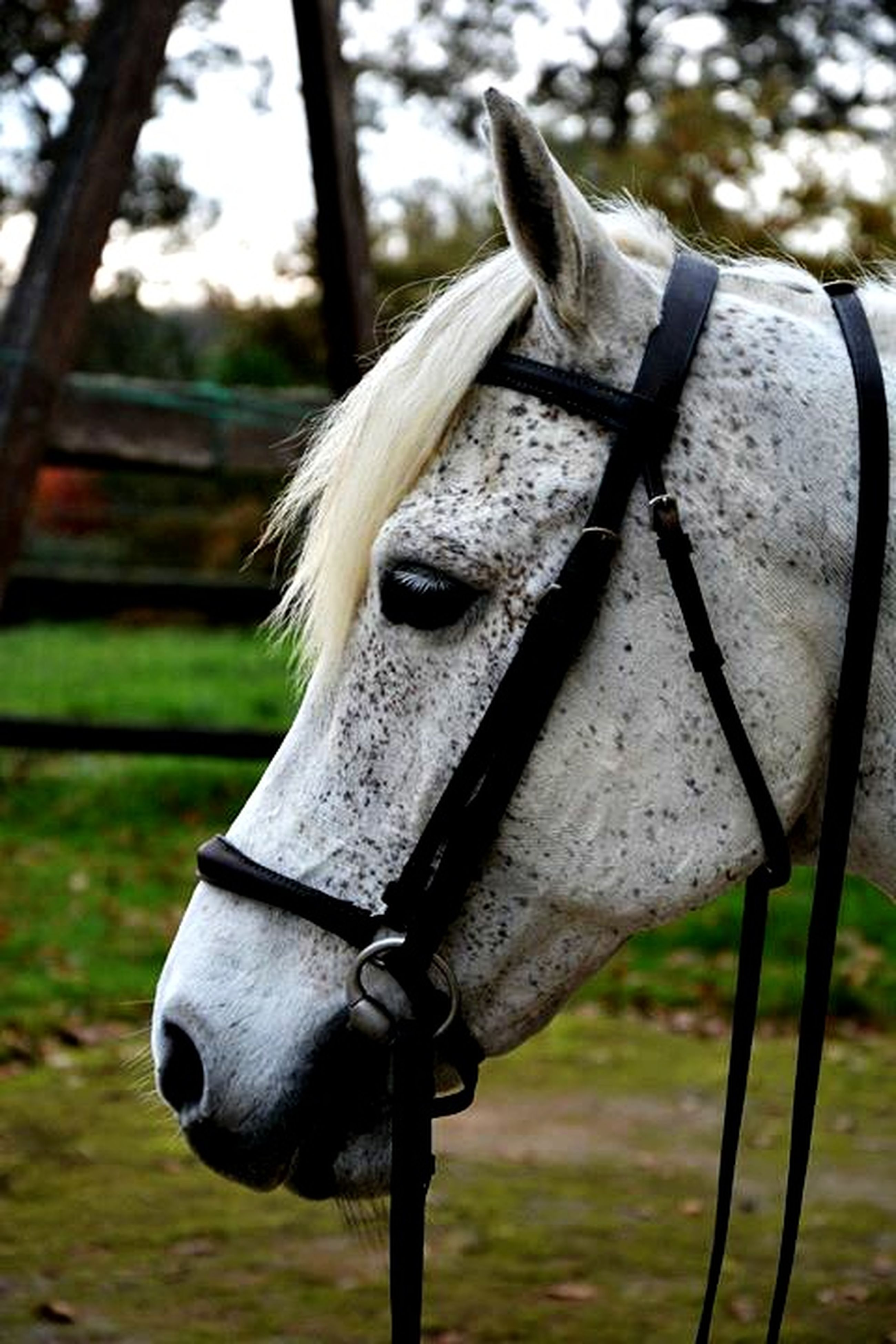 animal themes, one animal, focus on foreground, animal head, horse, close-up, fence, mammal, livestock, animal body part, herbivorous, wildlife, field, animals in the wild, domestic animals, day, bridle, part of, outdoors, metal
