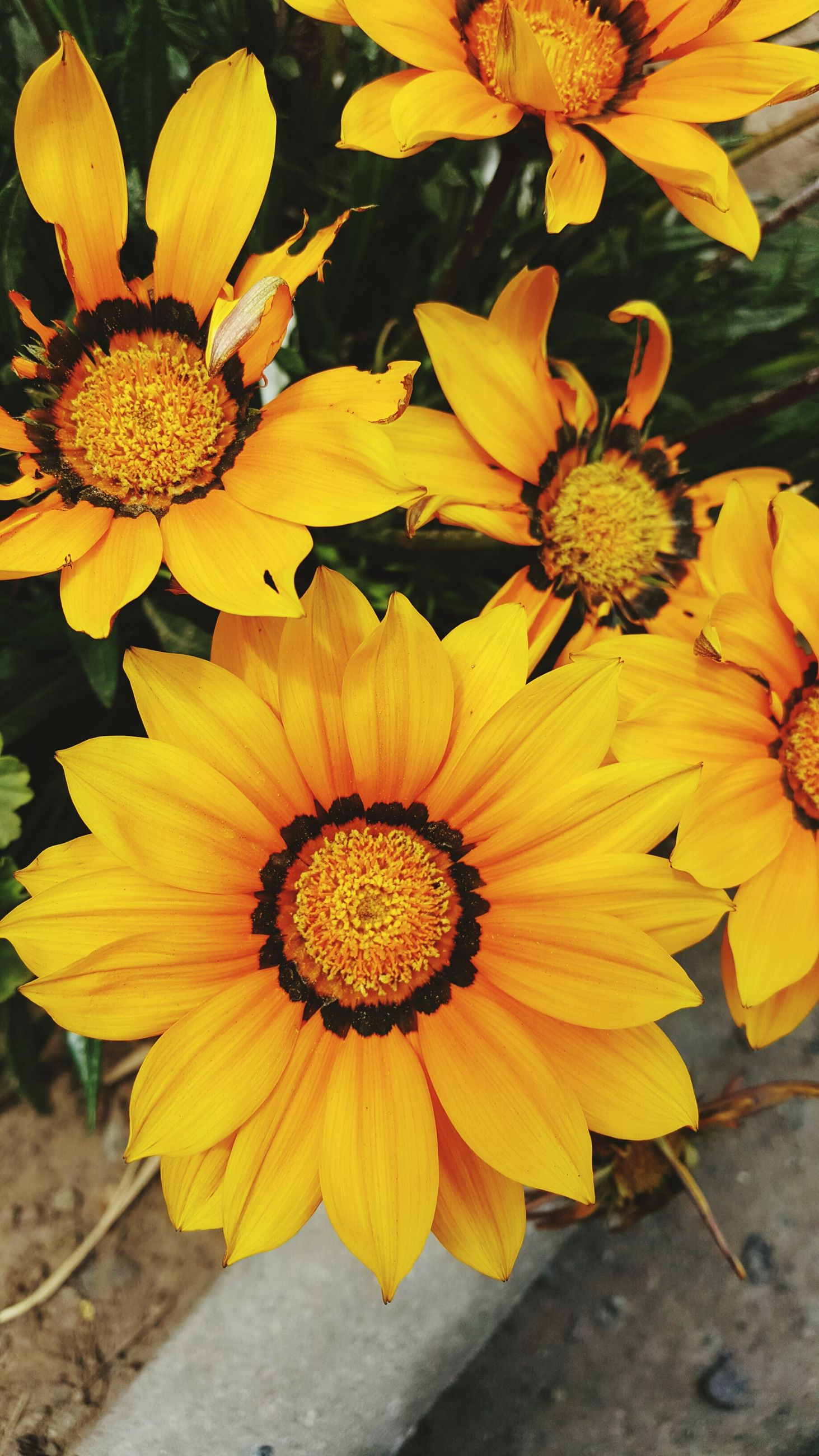 flower, petal, yellow, flower head, fragility, freshness, close-up, growth, beauty in nature, pollen, blooming, plant, nature, high angle view, focus on foreground, in bloom, day, no people, outdoors, botany