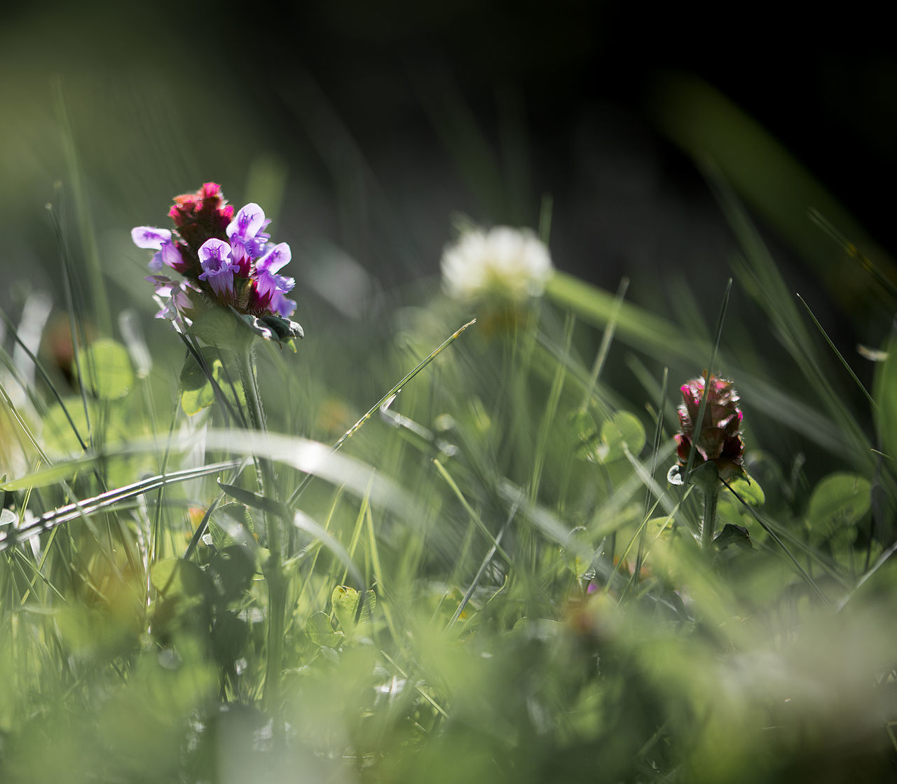 Animal Themes Art ArtWork Beauty In Nature Beauty In Nature Close-up Clover Clovers  Day EyeEmNewHere Fantasy Flower Fragility Freshness Growth Meadow Nature Nature Nature Backgrounds No People Outdoors Plant Spring Summer The Baltics