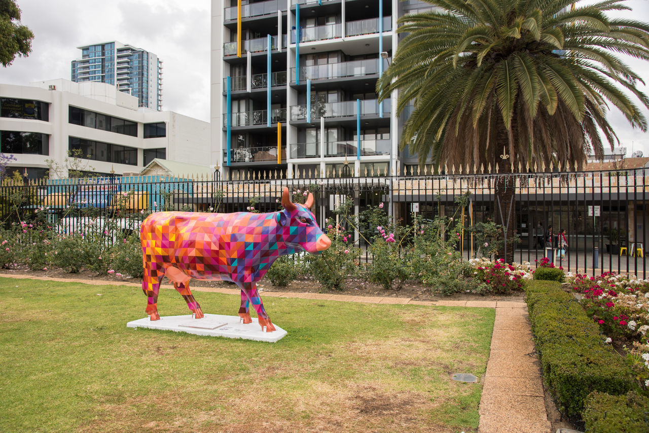 Vibrant cow sculpture art installation outside the Perth Mint in Perth, Western Australia. Animal Themes Architecture Art Building Exterior Built Structure Bull City Colorful Cow Day Grass Installation Outdoors Painted Palm Tree Perth Perth Mint Sky Skyscraper Statue Tree Urban Vibrant Color Vivid Western Australia