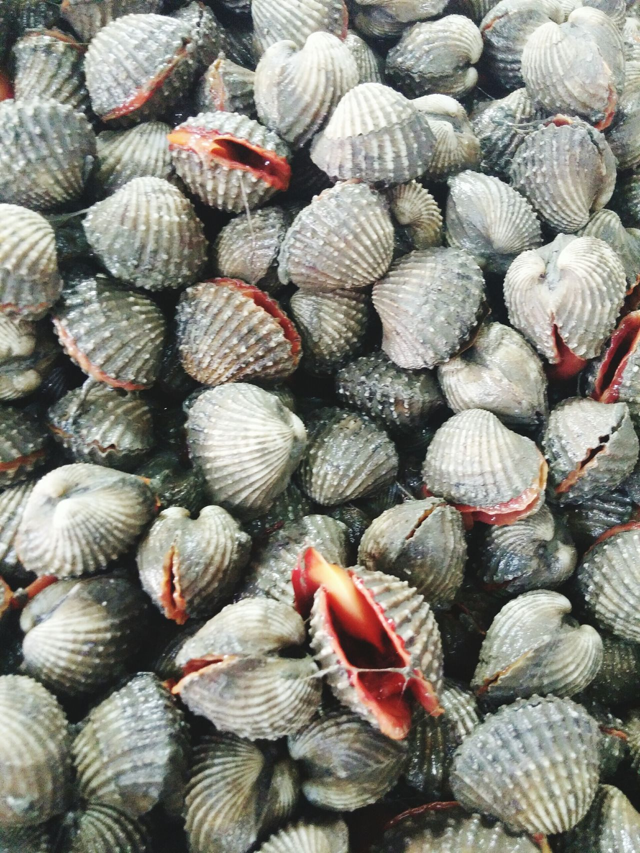 Fresh Cockles Seafoodfound in a Nan Market, Northeast Thailand.
