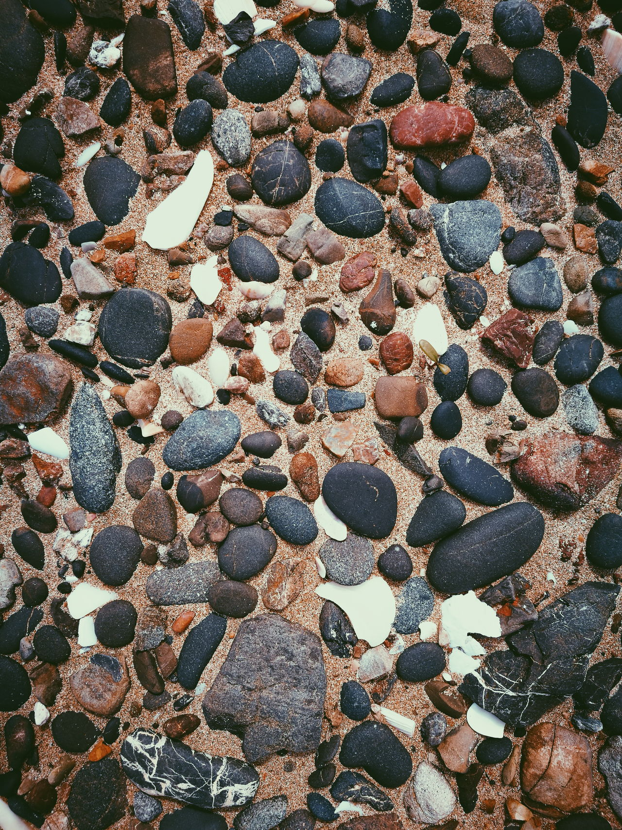 Under foot Stones Pebbles On A Beach Birds Eye View Backgrounds Stone - Object Full Frame Beach High Angle View Textured  Abundance Close-up Sand Pebble Day Outdoors Nature Large Group Of Objects Creativity No People Shore Multi Colored Extreme Close Up Texture In Nature Stones & Water