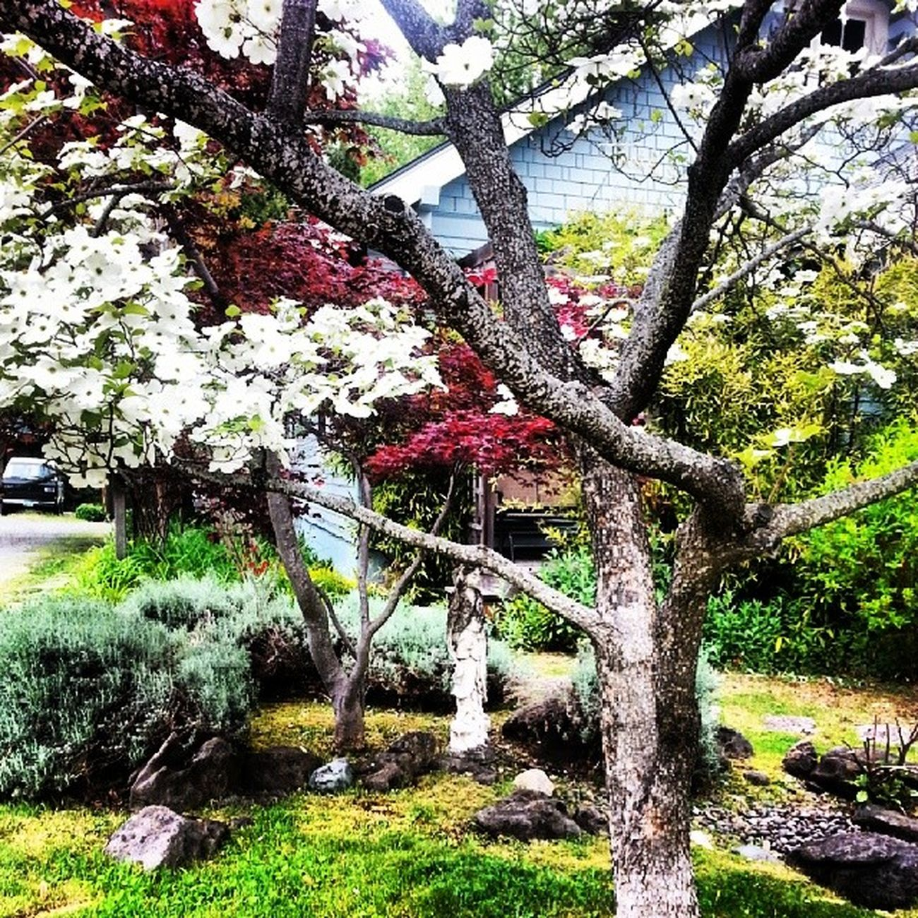 Nature NaturalBeauty Ashland Southernoregon Oregon Trees Flowers Colorful Noisy Vivid