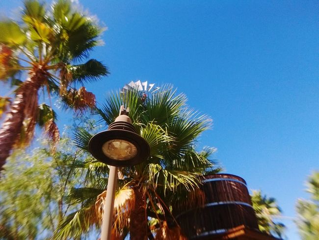 Palm Tree Low Angle View Tree Blue Tree Trunk Clear Sky Tall - High Sky Nature Scenics Tropical Climate Day Coconut Palm Tree Outdoors Palm Leaf Tranquility Green Beauty In Nature Tranquil Scene Windmill Watertank Lightpost Beautiful Italian kiss. Fresh On Eyeem