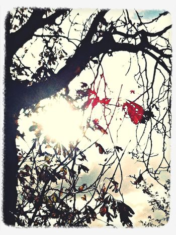 Najaars zonnetje. Renkum My Town Nature Sunshine!