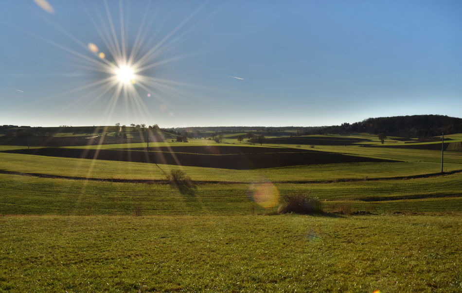 December sun over fields Agriculture Beauty In Nature Blue Blue Sky Day December December Sun Fields Fields And Sky Fieldscape Grass Green Color Landscape Lens Flare Nature Nature No People Outdoors Scenics Sky Sun Sunlight Sunny Sunny Day Sunshine