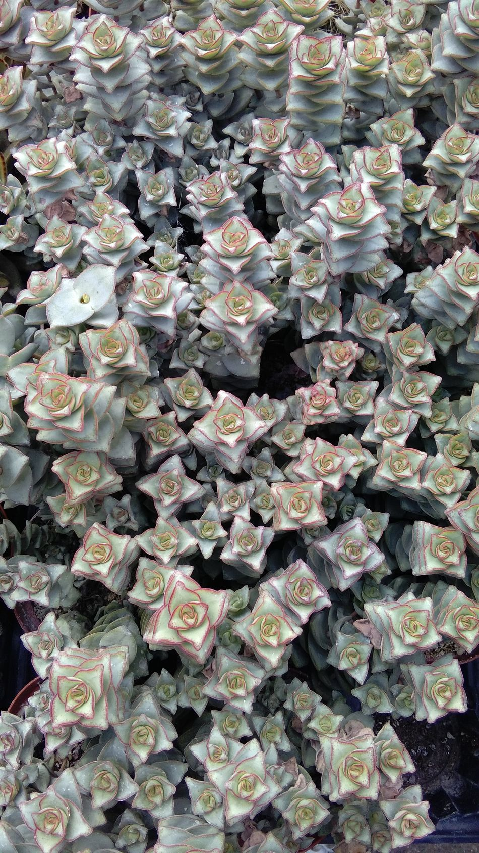 3d Flowers 3D Effects Flowers