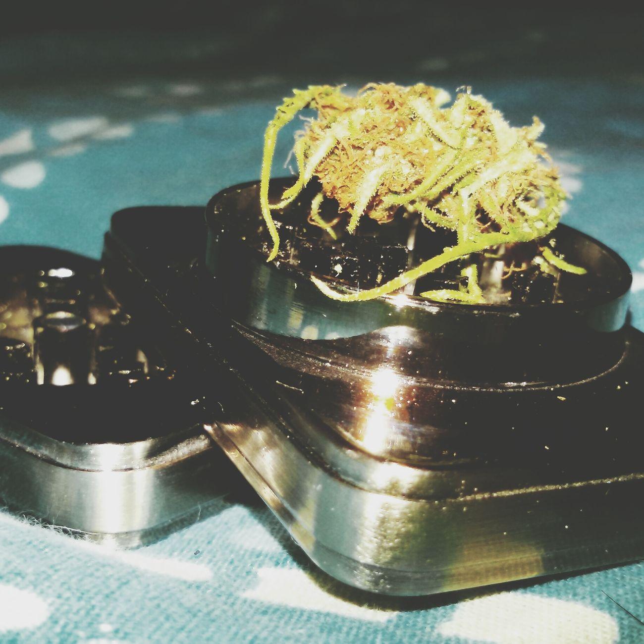 Caramel Kush Weed Smoking Weed Ganjah