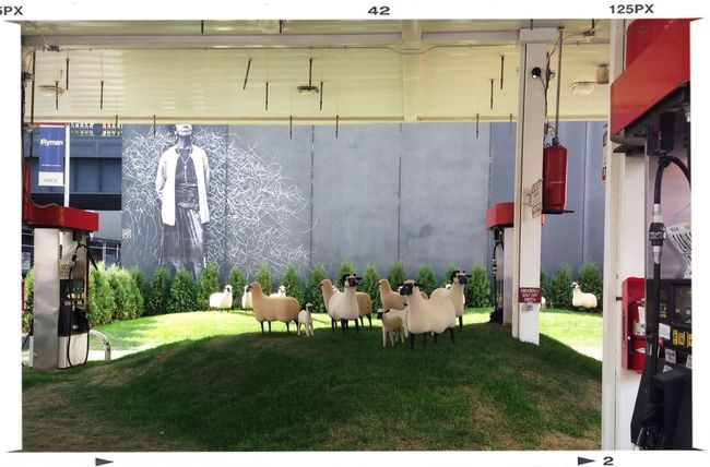 sheep in the city Gettystation