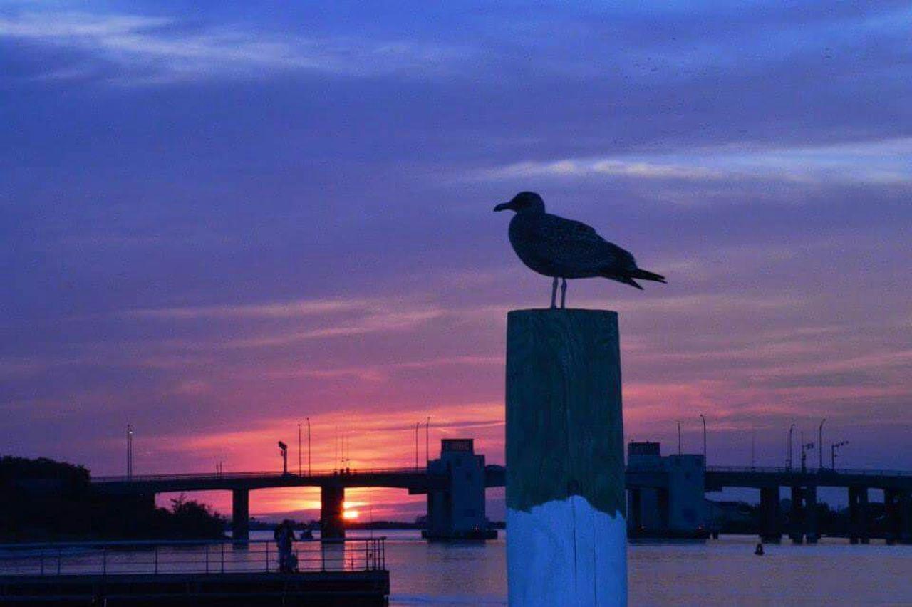 Longisland Long Island Sunset Baylife Bridges