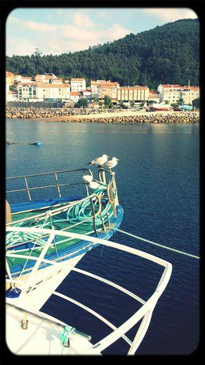 Porto Do Son Boats
