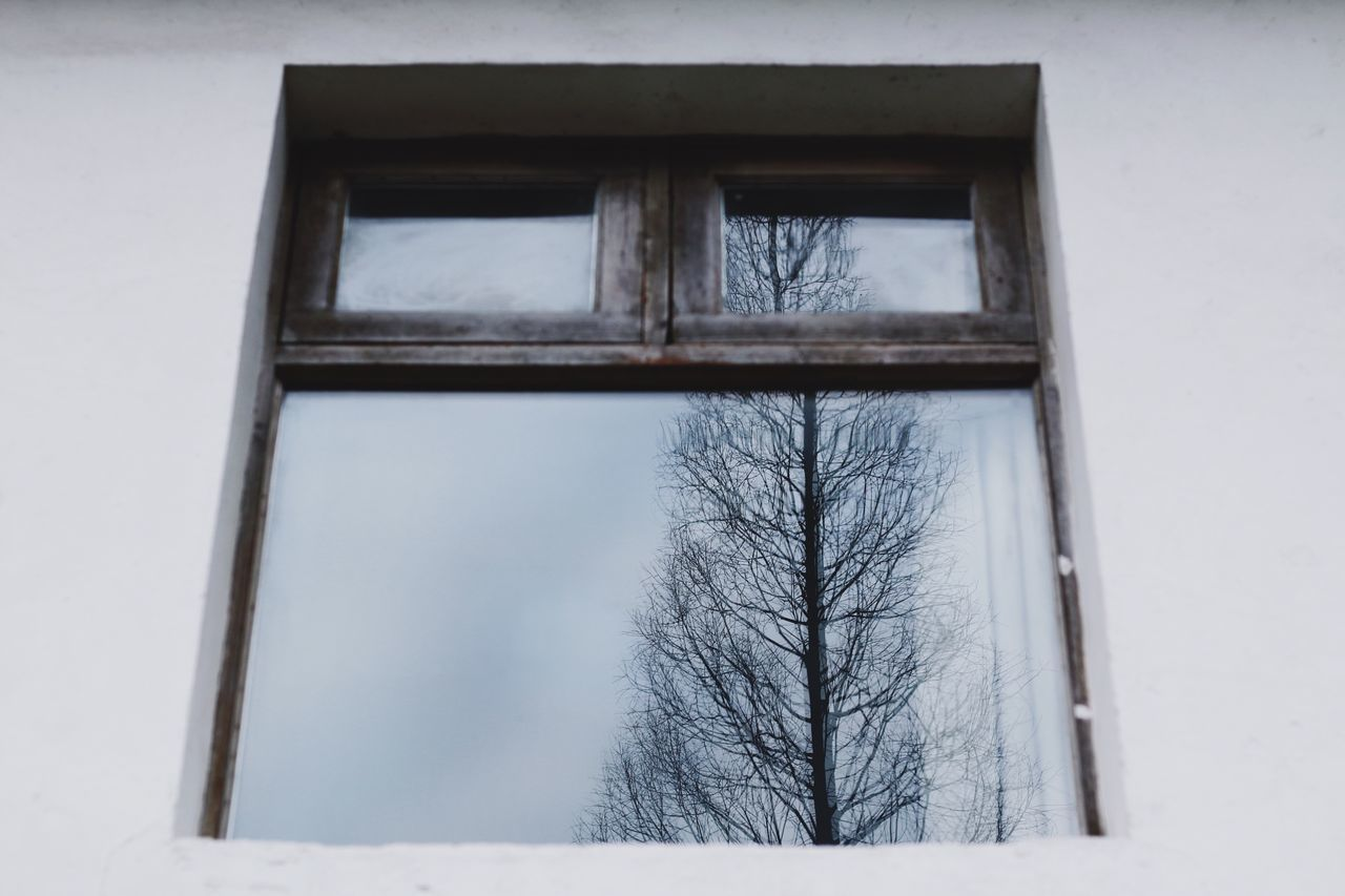 Windows Window View Window Reflections Bare Tree Winter Snow Cold Temperature Tree Low Angle View Day Nature No People Architecture Outdoors Sky Spring From My Point Of View EyeEmNewHere EyeEm Gallery Beautiful Nature Springtime Tree_collection  Tree Reflection