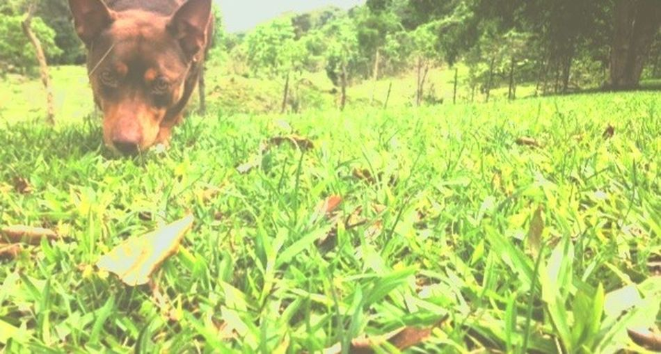 Dog Green Color Nature One Animal No People Day Domestic Animals Animal Themes First Eyeem Photo