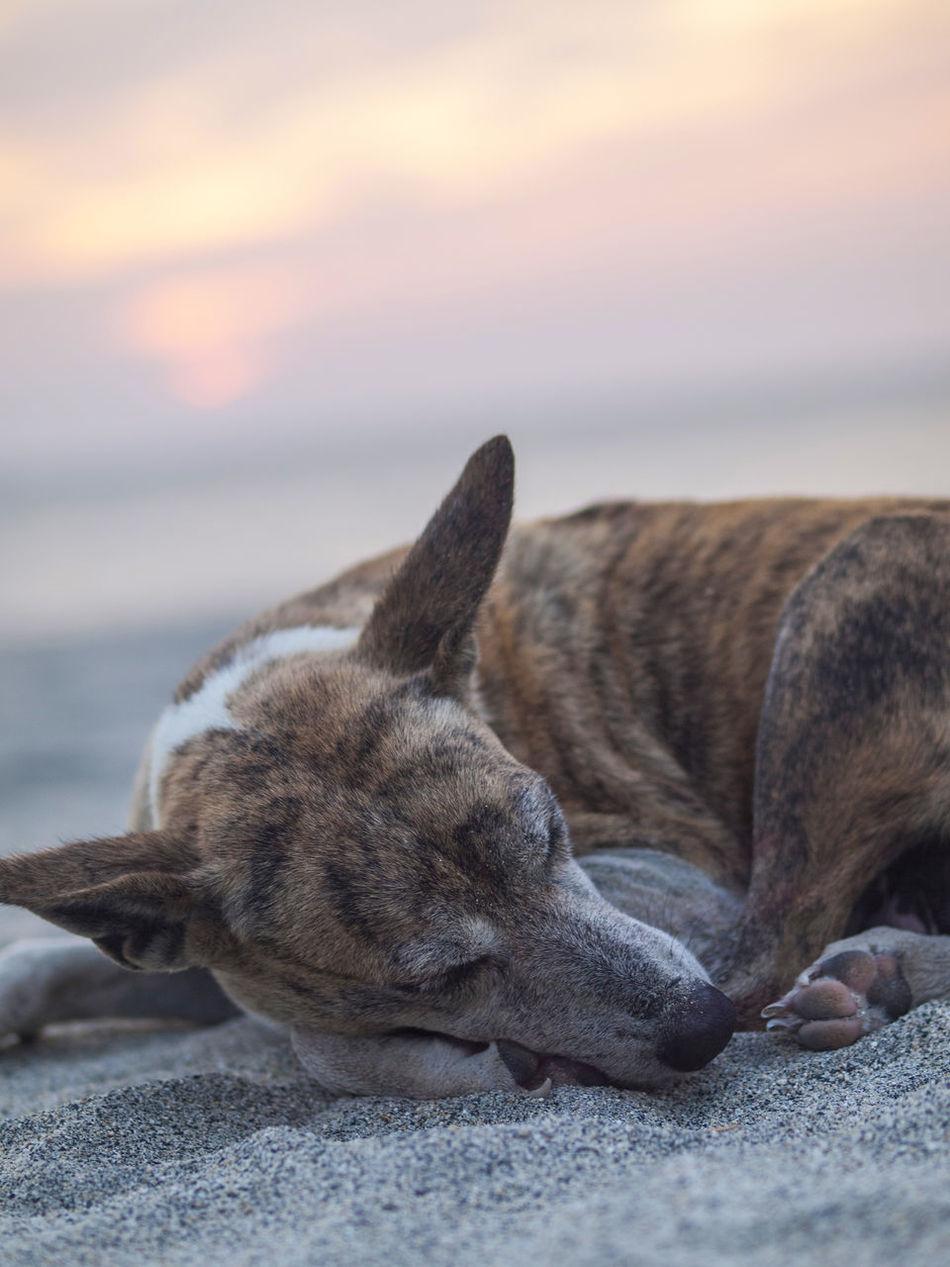 Beautiful stock photos of sand, Animal Head, Animal Themes, Beach, Close-Up