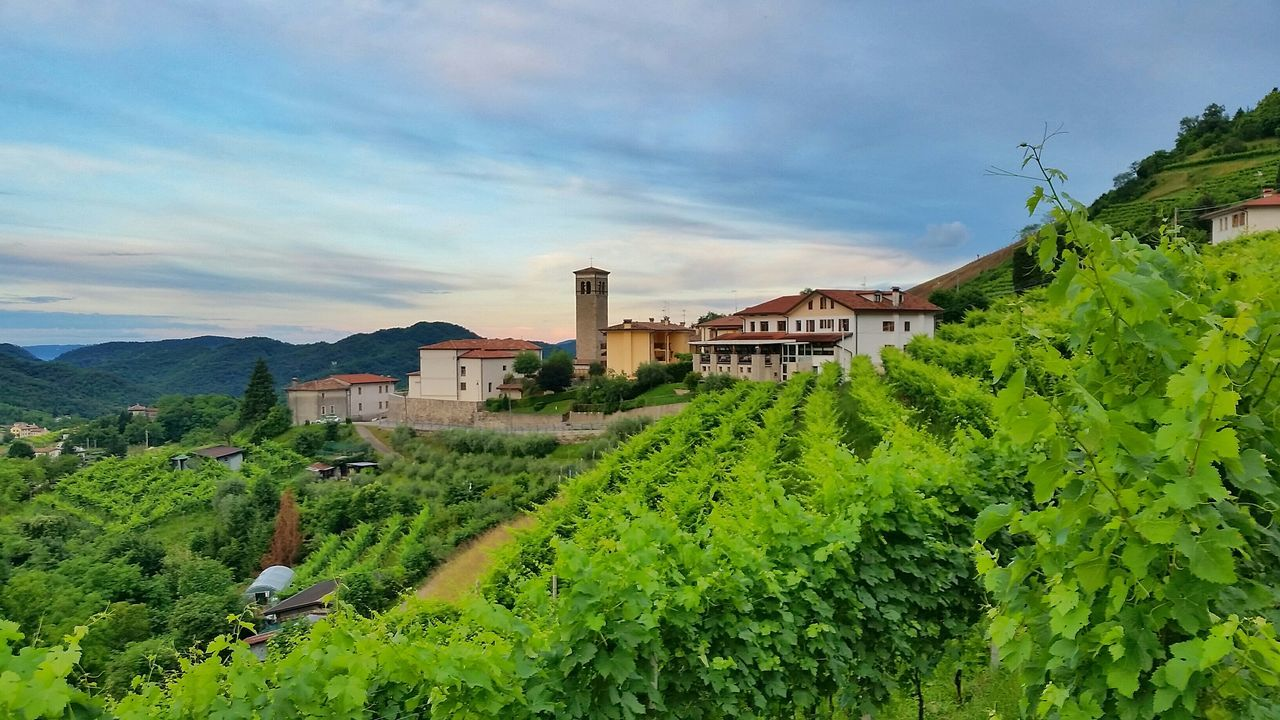 Rolle  Prosecco ConeglianoValdobbiadene landscape sunrise wine paradise