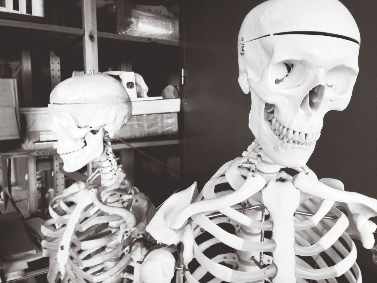 Human skeletons in laboratory