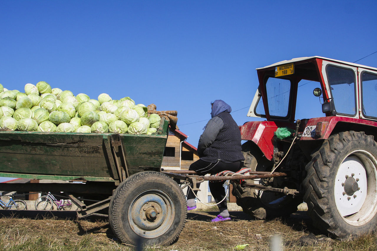 Agriculture Bukovina Cabbage Clear Sky Day Fair Farm Farmer Farmers Farmers Life Farmers Market Farmersmarket Food For Sale Healthy Eating Market Marketplace Outdoors Real People Real People, Real Lives Romania Rural Scene Tractor Vegetables Working