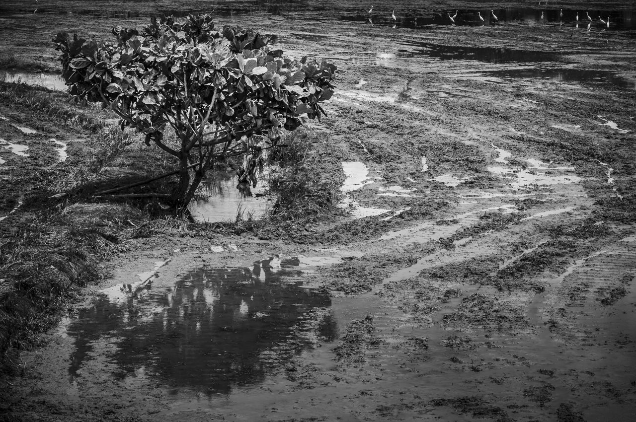 Beauty In Nature Black & White Black And White Calm Curves And Lines Field Ground Landscapes With WhiteWall Nature Reflection Scenics Soil Tranquil Scene Tranquility Tree Water