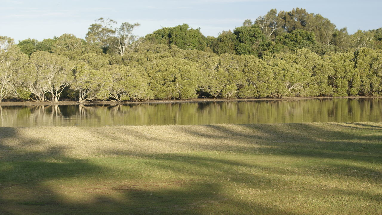 First Eyeem Photo Mangroves Salt Water Beauty In Nature Outdoors Lake No People Water Nature Salt Water