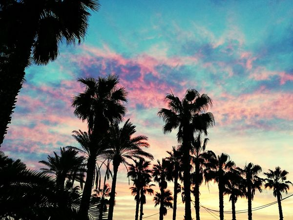 Sunset Palm Tree Nature Silhouette Sky Beauty In Nature Tree Landscape Outdoors Scenics Multi Colored No People Sea Vacations Water Day