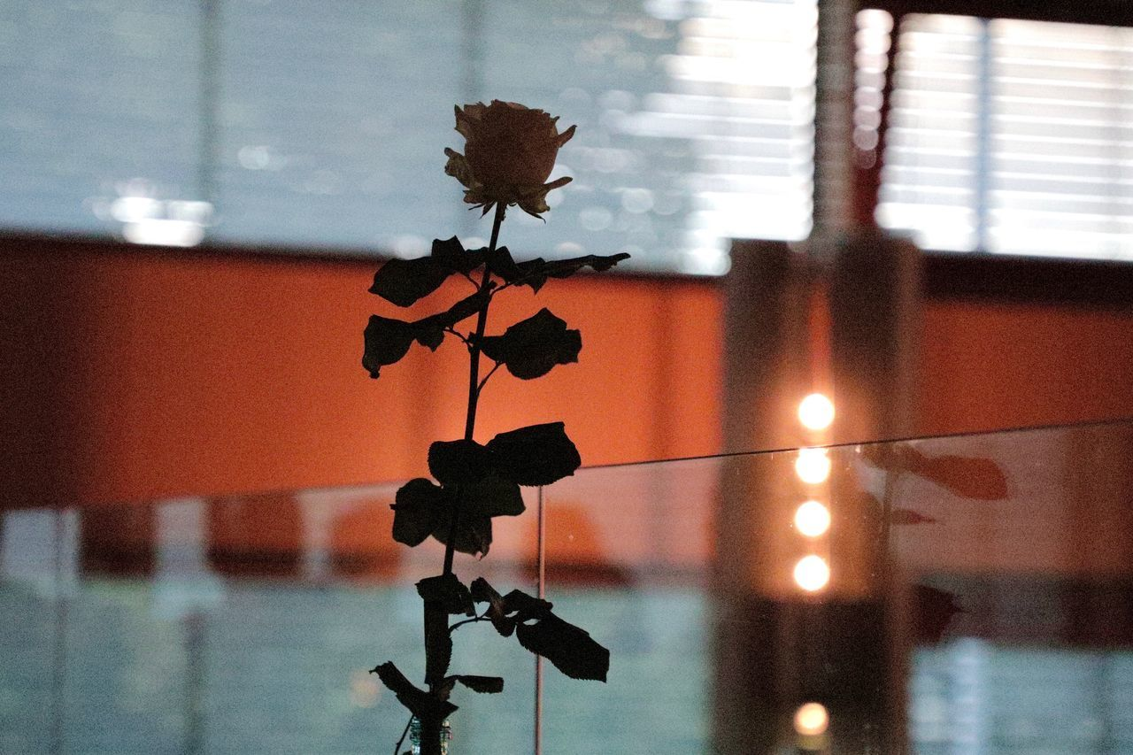 Close-up Day Flower Focus On Foreground Geometry Glass Hanging Indoors  Light No People Reflection Rose - Flower Rosé Shadow Shillouette