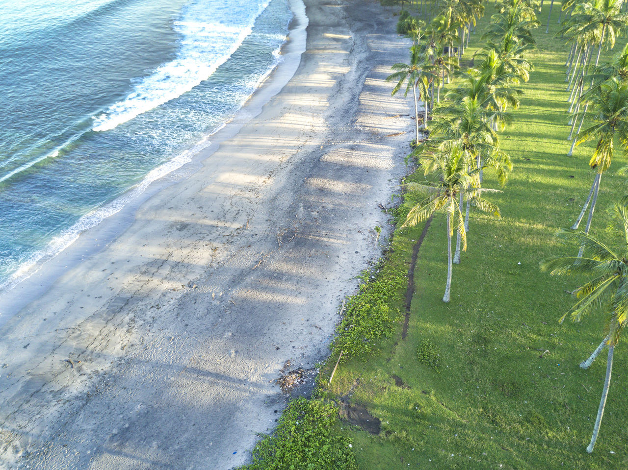 High Angle View Of Palm Trees Growing At Beach