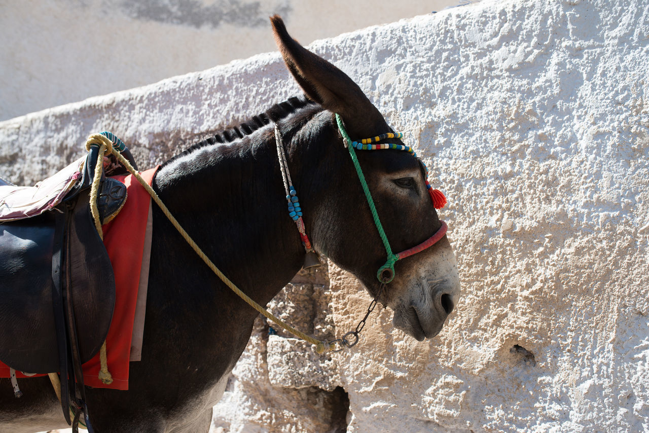 Donkey Standing By Wall