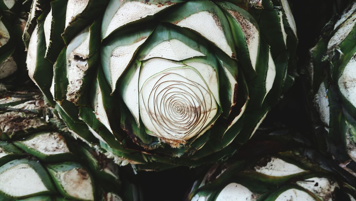 Agave Plant Agave Food And Drink Culture And Tradition Eyemphotography Mexico Travel Tequila,jalisco MomentsToRemember Travel Destinations Walking Around The City  Tequila - Drink Jalisco, México Sisters ❤ Tequila Mexico Day Off Work Looking At Camera Happyness Tequila Shots